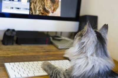 猫がパソコンで動画を見ている画像